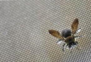 Tinkleliai nuo vabzdžių