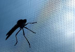 Сетки от комаров