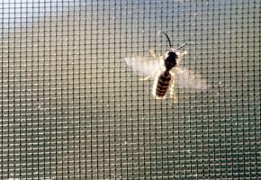 Tinkleliai - lengvai montuojama apsauga nuo vabzdžių