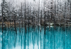 Symfonia natury